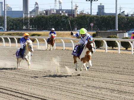 120219ポニーレースin川崎-レース-07