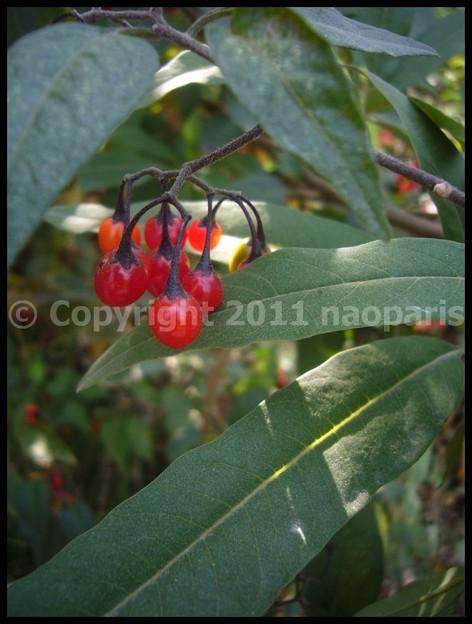 Photos: P2880298