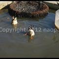Photos: P3030692