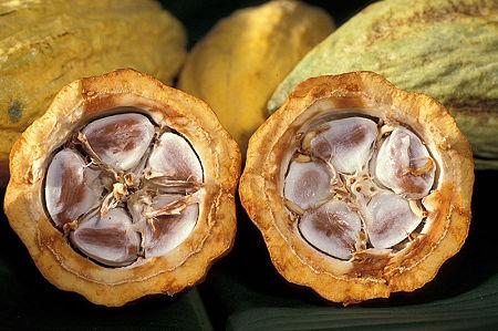 800px-Cacao-pod-k4636-14
