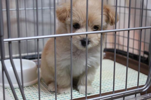 写真: こちらを見つめる犬