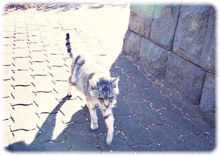 猫0216