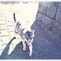 写真: 猫0216
