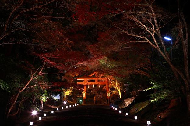 Photos: 『紅煌。。。』 ~日吉神社~