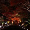 『紅煌。。。』 ~日吉神社~