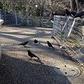 写真: 東山動植物園_09