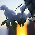Photos: 朝陽に染まる雪