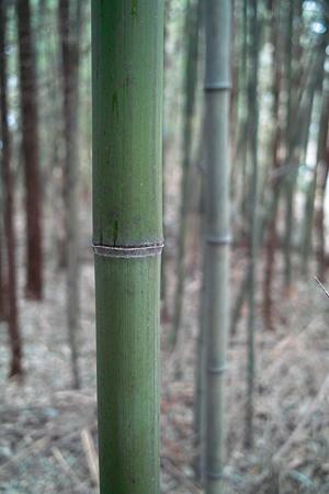 bamboo03232012dp2-02