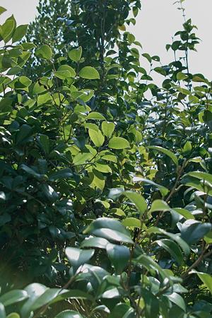 leaves03262012dp2-04