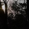 Photos: Trees04082012sd15-05