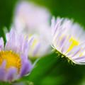 野に咲く お花