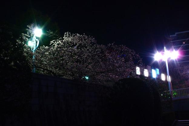 写真: 袂桜