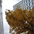 街の中の秋