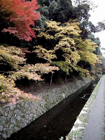 京都 663