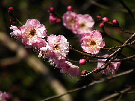 9上野花園神社1・13