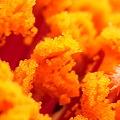 写真: 花粉の森2