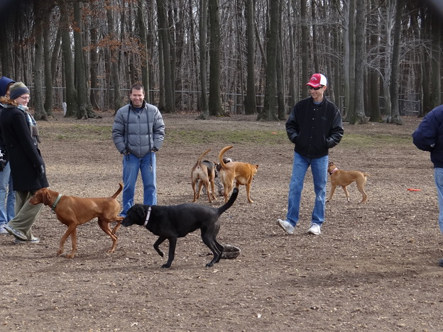 Photos: Off-leash Dog Park その1