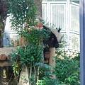 Photos: オットコンデジによる、パンダの写真