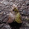 写真: yamanao999_insect2011_309