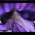 写真: 7D+HM-TLB7AD 「更に、7D側で5倍表示」