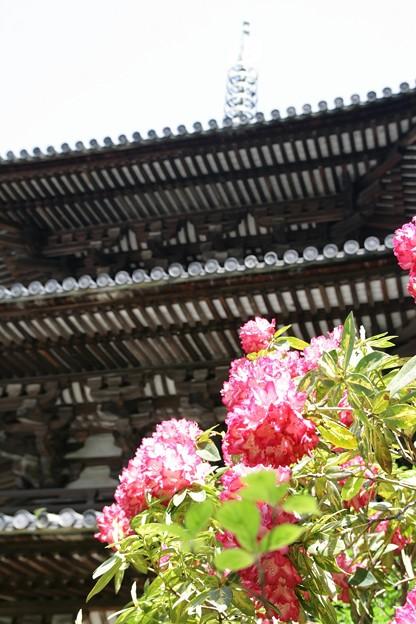 IMG_5462當麻寺・西南院・西南院庭園・石楠花と西院(国宝)