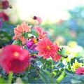 写真: 花園・・・。