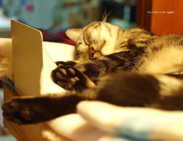 いい夢見てます。