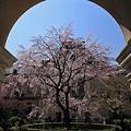 写真: 京都府庁・旧本館24