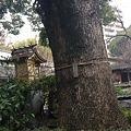 写真: Totoro's tree