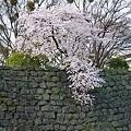 石垣を飾る
