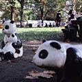 子パンダが見る夢