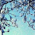 雪舞い落ちる