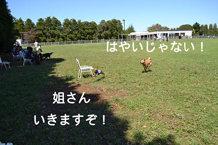 DSC_0379_1