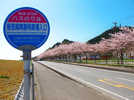 慈悲尾の桜並木