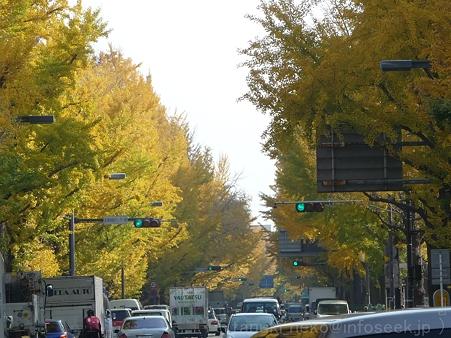 111130-横浜 紅葉  山下公園通り (2)