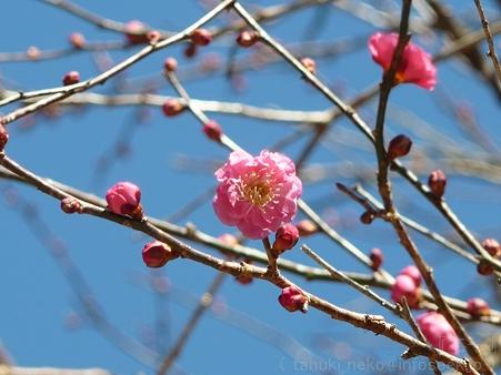 120208-荏柄天神社 (3)