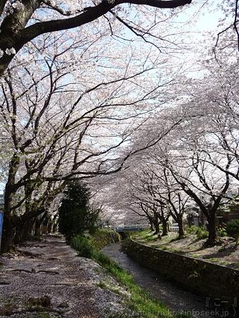 120412-千本桜 (39)