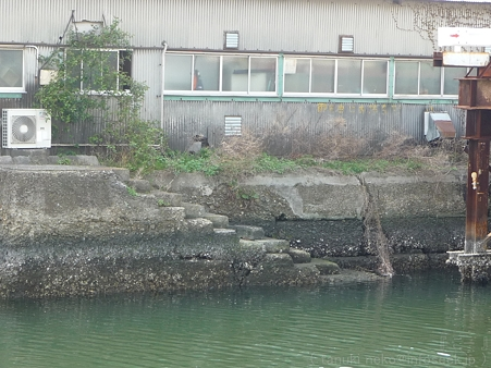 120413-港の見える丘公園 (46)