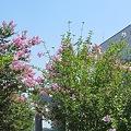 写真: 要塞の花
