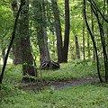Photos: 二の丸雑木林2