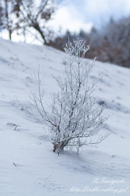Photos: 雪 EOS7D EF85 F1.8USM
