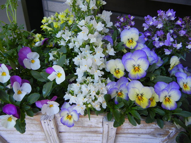 リナリア&ビオラの花車