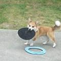 Photos: 円盤キャッチ1