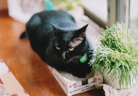 優雅な黒猫