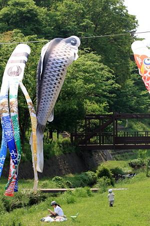 2012.05.06 和泉川 鯉幟