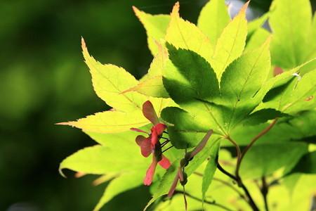 2012.06.18 三渓園 紅葉