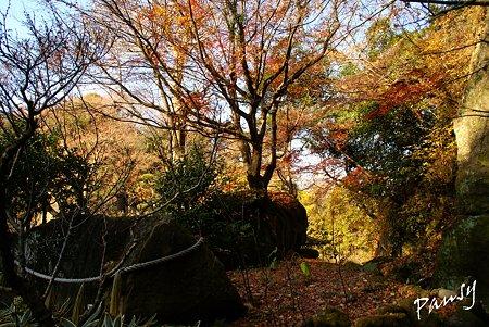 大きな岩と・・冬の明月院・・9