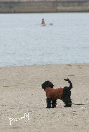 海をみつめる犬・・