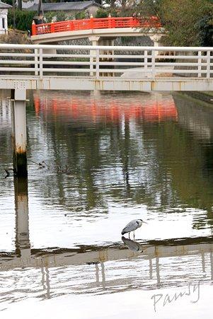 朱塗りの橋と・・青鷺と・・