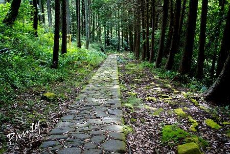 光る苔の石畳・・
